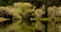 Shows me colours when there's none to see.. (dmunro100) Tags: winter lake tree gardens canon reflections eos spring seasons outdoor peaceful serene southaustralia botanicgardens adelaidehills mountlofty canonefs1755mmf28isusm 60d davidmunro efs1755mmf28