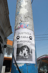 Arequipa (-AX-) Tags: chien perú poteau arequipa afficheaffiches