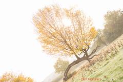 Hatfield_Forest-49 (Eldorino) Tags: park uk morning autumn trees nature forest sunrise landscape countryside nikon britain centre jour hatfield bishops stortford essex hertfordshire stanstead hatfieldforest