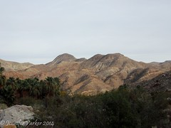 Indian Canyon Hills (jennifer_parker81) Tags: palms palmsprings southerncalifornia californiafanpalm