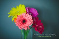 Spring (Jackie888) Tags: mygardenbekindtoyourself
