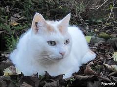 Mouna a profit au maximum de son jardin avec ce beau temps qui se trouve, hlas ce soir , un peu perturb par un dbut de pluie (Figareine- Michelle) Tags: chat supershot bestofcats kittyschoice catmoments coth5 vg~catsgallery