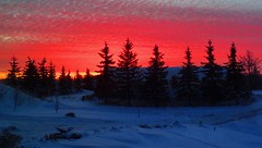 This morning's sunrise (peggyhr) Tags: red sky snow canada black clouds sunrise silhouettes alberta thegalaxy 50faves peggyhr bluebirdestates level1photographyforrecreation thelooklevel1red thelooklevel2yellow rainbowofnaturelevel1red super~sixbronzestage1 dsc03380a