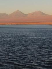 Laguna Chaxa (Mono Andes) Tags: chile volcano andes desierto salardeatacama volcn volcanoe lagunachaxa punadeatacama reservanacionallosflamencos volcnlicancabur