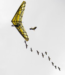 Gros oiseau (Doonia31) Tags: ciel guide vol ulm oiseaux ailes voler