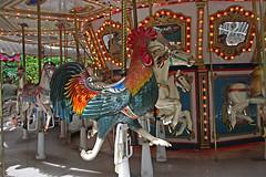 Carousel Rooster, Palm Beach Zoo (4 of 7) (gg1electrice60) Tags: palmbeachzoo carousel wildlifecarousel dreherpark 4807drehertrailn carrousel merrygoround 4807drehertrailnorth amusementpark drehertrailnorth drehertrailn florida palmbeachcounty interstate95 i95 zoo park wildlife summitboulevard summitblvd rooster horses benches lights bulbs mirrors poles