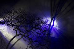 Night light in the Arboretum (unborn_tiger) Tags: light backlit tree winter nature arboretum night westonbirt show contour shape magic enchanted spooky