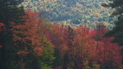 """This is the """"Gap Vista Scenery"""" along the Kanc - IMGP6626 (catchesthelight) Tags: northernnewengland nh nature mountains thekanc misspelled kangamangushighway kangamagushighway mustsee constructed 1959 traveled overamillionpeopleeachyear thekancamagushighway 34mileeastwestchannel 800000acre whitemountainnationalforest lincolnnhtoconwaynh trees change leaves summergreens breathtaking shadesofyellow red fall illuminated colorful dramatic enjoyable leafpeepingroute"""