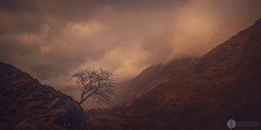 One Tree Hill (chrisD_photography) Tags: trees glencoe scotland badweather clouds mountains abigfave wow
