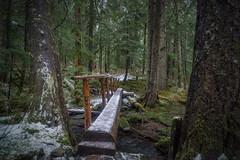 Ice Bridge (writing with light 2422 (Not Pro)) Tags: icebridge greenlaketrail trail trees hiking mountrainiernationalpark richborder sonya77 washingtonstate snow landscape forest