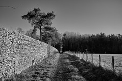 Straight Path (scottprice16) Tags: england lancashire clitheroe standen higherstanden aspinall landed path trees walk straight linear blackwhite fence fujix100 january winter