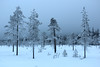 stop for a while (Olli.Dr) Tags: nature wild winter forest snowy trees canon sleeping life flora just breath