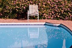 To Repair And Heal (MPnormaleye) Tags: chair pool water reflection backyard hedge shrub flowers sunny utata lensbaby soft velvet56 desert utata:project=tw565