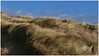 Kenfig Burrows. (brian.batters (B-C-B)) Tags: kenfigburrows kenfignaturereservecentre kenfigsands wind gale sands sanddunes maramgrass