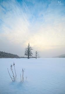 Éveil glacial sur les marais