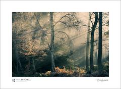 Side light... (tobchasinglight) Tags: buckinghamshire bucks burnham burnhambeeches cityoflondon corporationoflondon englishwoodland farnhamcommon stokecommon woodland ©paulmitchell