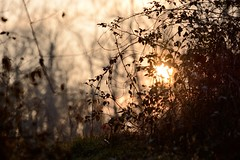 Sunset light in the forest (STE) Tags: fronde pov tramonto sunset luce light bosco silhouettes bokeh