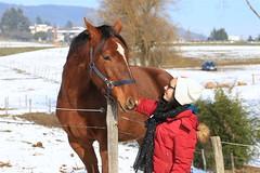2017-01-22_11h54m14 (lecridulama) Tags: lacdessapins rhônealpes winter hiver love cheval horse snow neige animauxdomestiques chevaux cublize auvergnerhônealpes france