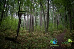 2016-Pinery-Provincial-Park-Wilderness-Trail-Fall-Ontario-3660