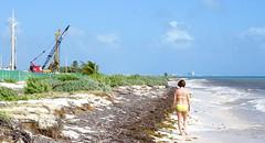 N beach cranes