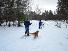 IMG_1852 snowshoeing with the dogs (jgagnon63@yahoo.com) Tags: snowshoeing snowshoe winter wintersports winterland winterfun february snow deltacountymi bramptontownship uppermichigan dogs dog pets fun exercise