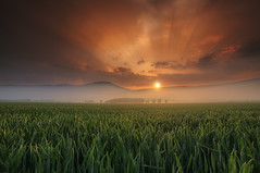 fog an burn (Rainer Schund) Tags: fog an burn nikon nikond700 natur nature natureexploring naturemasterclass nebel nebelmeer foggy sunrise sunrays sonnenaufgang sommer frühling spring