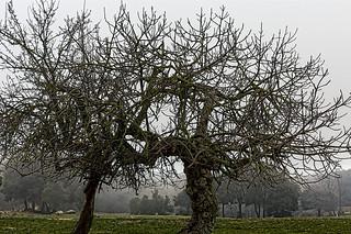 ARBOLES HIBERNANDO   -   HIBERNATING TREES