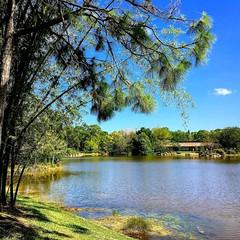 Peaceful (PeterCH51) Tags: usa us florida delraybeach morikamijapanesegardens morikami japanesegardens lake peaceful nature bamboo grove iphone peterch51