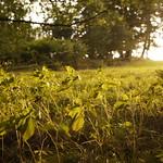 DSC06731 thumbnail