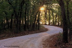 Country Trail at Sunrise (sgbrown56) Tags: nature landscapes sunrise driveway fall trees leaves morning trail country winding woods