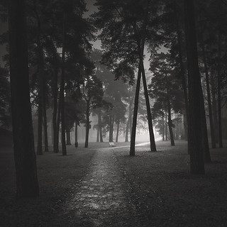 Through the Black Woods