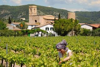 Traditional Spanish vinyard and its custodian