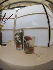 "Ponysons Bunch, Protea Pin Cushion & Dried 56 Coastal Grass Green by Ruth Smith ""Koryu School"" (nano.maus) Tags: fisheye lauritzengardens japaneseflowerarrangement omahabotanicalsociety japaneseambiencefestival"
