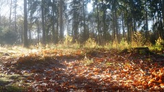 after a frosty night, vapours in the morning sun (Nelis Zevensloot) Tags: autumn automne herbst herfst veluwezoom winterlandscape lhiver winterlandschap rosendael rozendaal