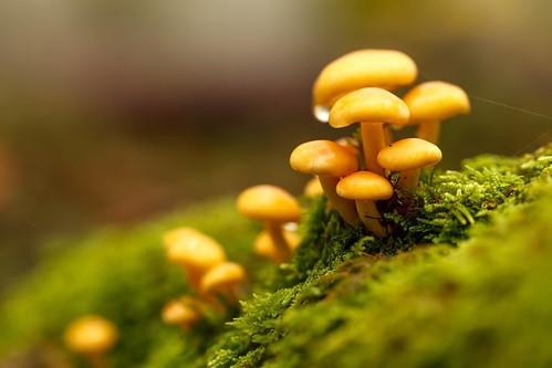 Mushrooms after rain