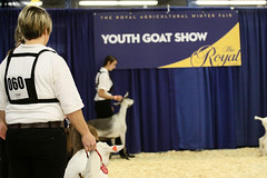 RAWF15 JSteadman 0104 (RoyalPhotographyTeam) Tags: sun royal goat 2015 rawf nov08
