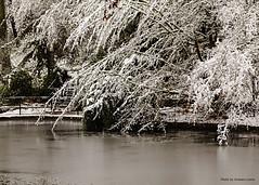 2015_12_13_019_hi (photo_graham) Tags: snow hockey icerink lithiapark osf keepingashlandinfocus