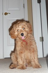 cooper-is-one-of-ginger-and-chewys-boys-_4963383357_o