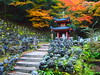 Merry X'smas dear friends (brisa estelar) Tags: kyoto otagi nenbutsu temple statues maple leaves autumn trees foliage upstairs green moss buddhism travel asia unseen japan