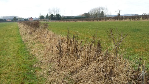 Proposed Long Forest Site - Holt, Wrexham - 23-1-17 (25)