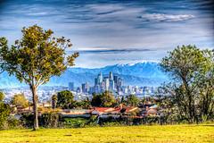 Skyline Between the Trees (Michael F. Nyiri) Tags: losangeles california southerncalifornia kennethhahnstaterecreationarea