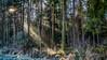 floating sunlight (ralfkai41) Tags: bäume sonnenstrahlen hdr forest lighting winter sunbeams leuchten sun woods trees outdoor nature wald natur sonne sunrays