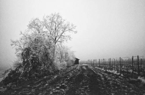 Einweg-Foto