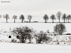 Ein paar Bäume im Schnee