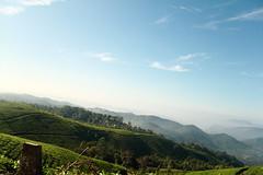 Moring sky, at Munnar (ilovethirdplanet) Tags: aerial hills teagardens morning idukki kerala india ind
