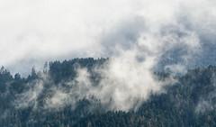 20170305-133934 (Ernst_P.) Tags: 135mm aut inzing landschaft nebel österreich ranggerköpfl samyang tirol wald walimex wolke clouds nubes niebla bosque forest mist