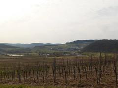 P1030137 (Unterwegs im Trierer Land) Tags: kanzem wiltingen saarbogen