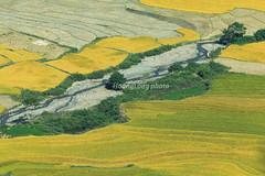 _Y2U7109.1015.Làng Môn.Nguyên Bình.Cao Bằng (hoanglongphoto) Tags: asia asian vietnam northvietnam northeastvietnam landscape scenery vietnamlandscape vietnamscenery vietnamscene outdoor fields ricefields harvest dale homes house canoneos1dx canonef100400mmf4556lisiiusmlens đôngbắc caobằng nguyênbình phongcảnh cánhđồnglúa lúachín mùagặt mùagặtcaobằng mùalúachíncaobằng làngmôn