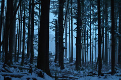 Cold Silhouettes (Kristian Francke) Tags: forest tree cold winter outdoors nature natural bc canada british columbia pentax snow trees landscape abstract art different silhouette light