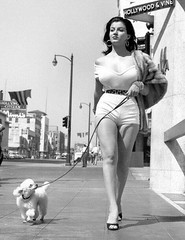 Lady in Short Shorts with Poodle (kevin63) Tags: lightner scans photos women vintagecheese facebook old retro vintage shortshorts blackandwhite woman young curvy voluptuous sandals dog leash toy poodle daylight tight reveling cameltoe leggy pretty beauty losangeles